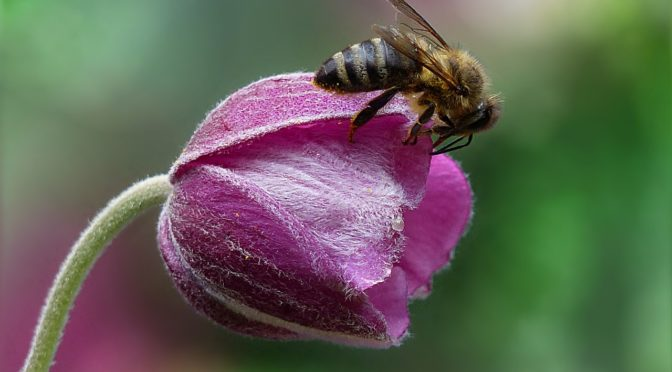 Keep Calm and Love Bees:  A Personal Link Back to Outlander